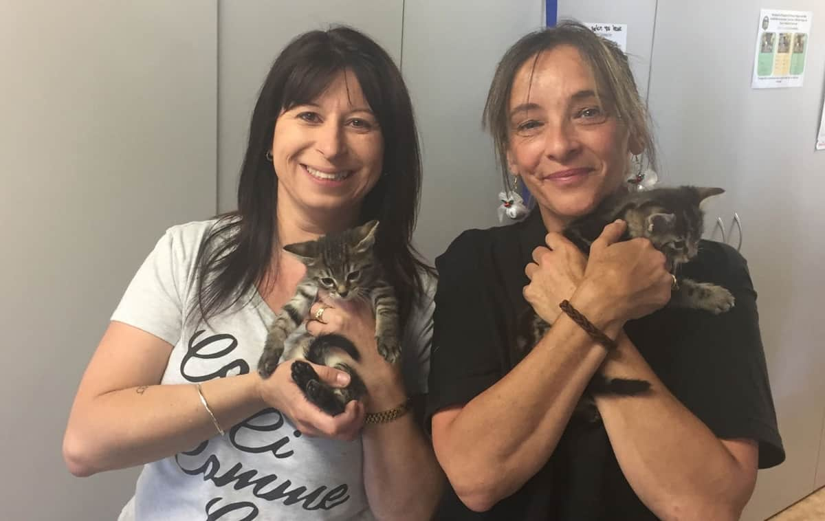 Deb and Rachael from Just Cats Tasmania, hold kittens