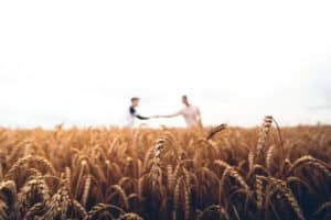 Two men stand in a wheat crop and have a conversation