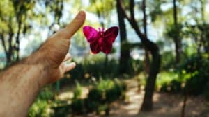 Hand reaching towards butterfly in forest