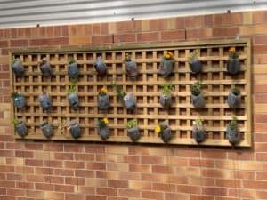 Wall of hanging plants in milk containers