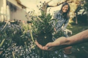 Hand holding plant in garden