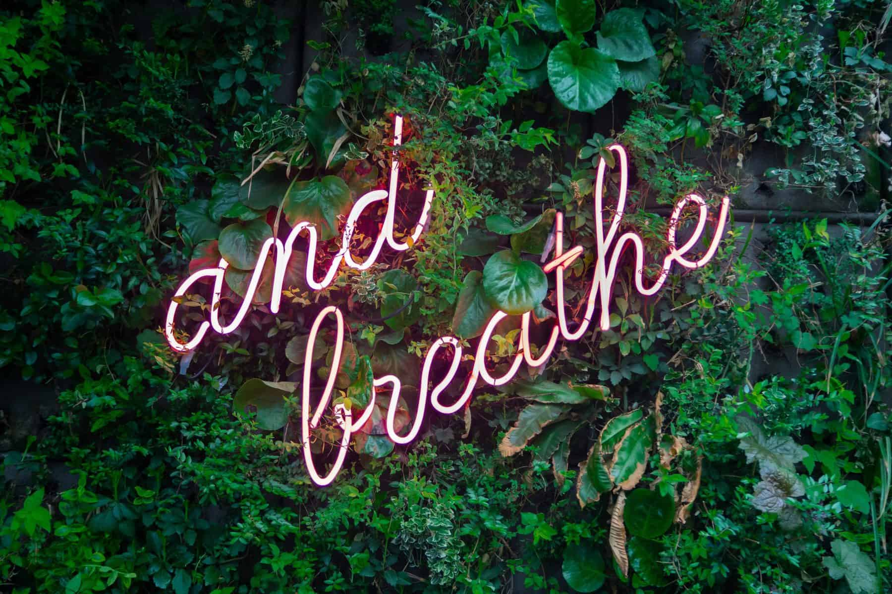 """fluorescent lights saying """"and breathe"""" on a background of green leaves"""